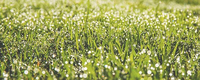 mähroboter bei regen-rasen